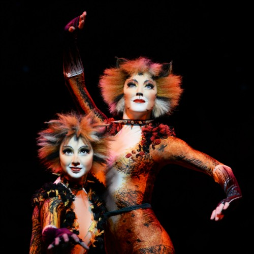Cats The Musical Auckland Events Heart Of The City