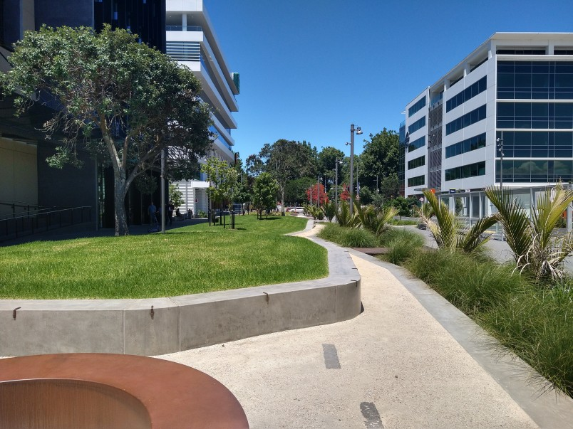 Daldy Street linear park: attractive landscaping including grass, tree, seating and path in Wynyard Quarter